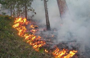 В Киевской области горит «Чернобыльская пуща»