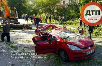 В Киеве дерево раздавило автомобиль, погиб ребенок