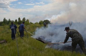 Возгорание травы в «Чернобыльской пуще» локализовали