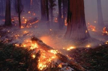 ГосЧС: Лес под Киевом подожгли, чтобы дестабилизировать ситуацию
