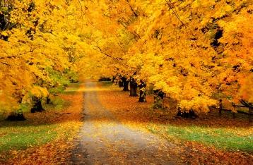 Гидрометцентр прогнозирует теплую осень и мягкую зиму