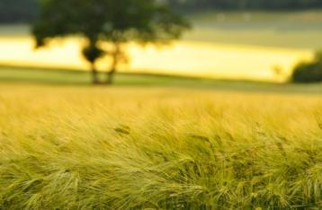 ВР продлила мораторий на продажу земли