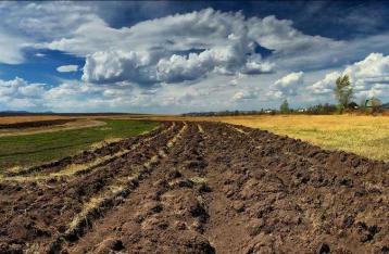 Кабмин планирует запустить продажу земли с 2017 года