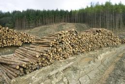 Об отмене моратория на экспорт украинского леса