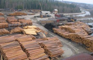 ЕС: Запрет на экспорт леса-кругляка не предотвращает незаконную вырубку