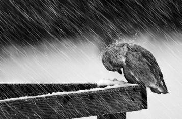 Сегодня в Украину придут снегопады, метели, гололед и мороз