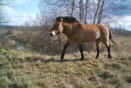 Жизнь в Зоне отчуждения: что происходит с природой и животными после аварии на ЧАЭС