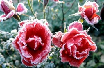 Завтра почти по всей Украине ожидаются заморозки