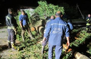 Стихия в Украине: обесточены 745 сел, повалены сотни деревьев, 17 человек пострадали