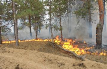 На Херсонщине вспыхнул крупный лесной пожар