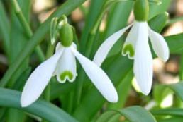 Весна в Украину придет в 20-х числах марта