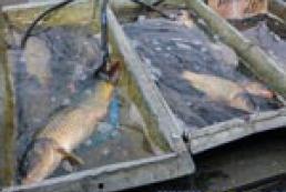 Рейд ринками Київщини, або Дорога рибка до обіду