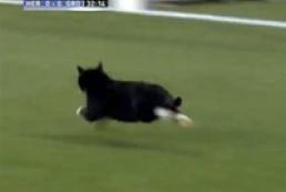 В Нидерландах во время футбольного матча на поле выбежал кот
