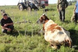 На Виннитчине из заброшенного колодца вытащили корову