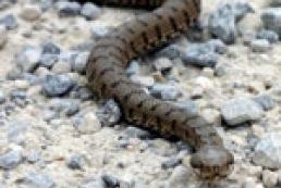 Как не стать жертвой ядовитых змей — советы специалистов