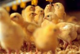Казахстан усилил контроль за украинской курятиной
