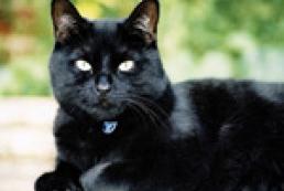 ЛЯПота за неделю: Черная кошка Ефремова, папуасы Карпунцова, страсти Кожары