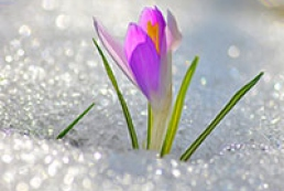 Цьому тижня в Україні буде аномально тепло
