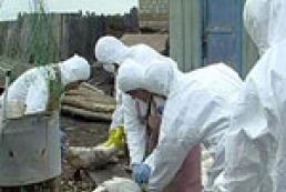 На турецко-грузинской границе выявлен птичий грипп