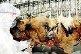 В Турции 12 человек подхватили птичий грипп